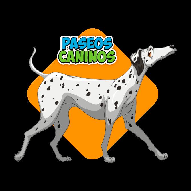 Guardería canina en Medellín
